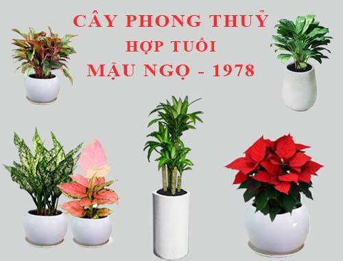 Người Mậu Ngọ nên chọn cây hoa trạng nguyên hay cây hồng môn