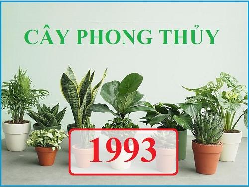 Những người sinh năm 1993 hợp với các cây như cây kim ngân, cây sen đá, cây Ngọc Ngân, cây phát tài, cây xương rồng và cây cung điện vàng