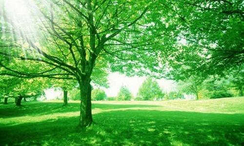 Những người sinh năm 1958 nên chọn các cây có màu chủ đạo như nâu, xanh biển, xám, đen.