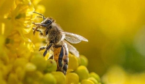 con ong số bao nhiêu