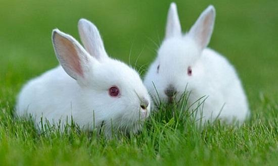 con thỏ số đề