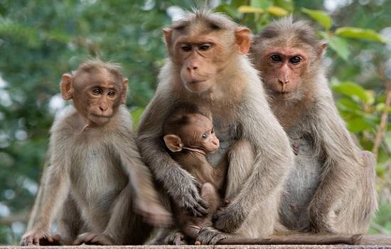 con khỉ số mấy