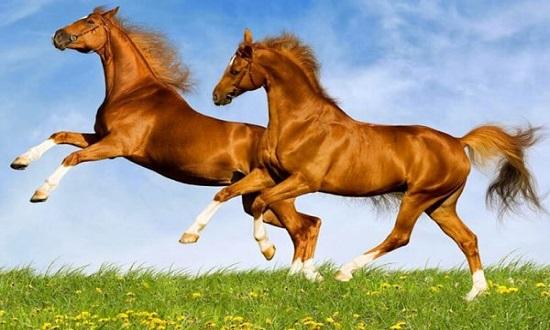 con ngựa số mấy